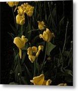 Sleepy Yellow Tulips Of The Silent Nocturne Metal Print