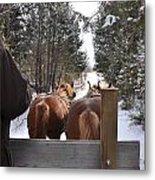 Sleigh Ride Dwn A Snowy Lane Metal Print