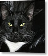 Slick The Black Cat Metal Print