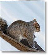 Sliding Squirrel Metal Print