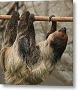 Sloth Metal Print by Ellen Henneke
