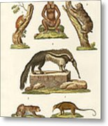 Sloths And Anteaters Metal Print