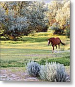 Slow And Easy Metal Print