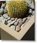 Small Barrel Cactus In Planter Metal Print