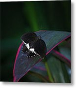 Small Black Butterfly Metal Print