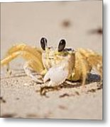 Small Crab On The Beach Metal Print