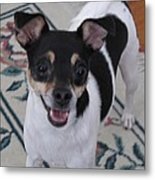 Small Dog Big Smile Metal Print