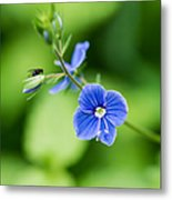 Small Fly On A Small Wildflower - Featured 3 Metal Print