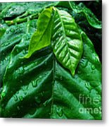 Small Leaves With Water Drops Metal Print
