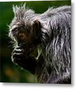 Small Monkey Eating Metal Print