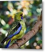 Small Parrot Metal Print