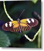 Small Postman Butterfly Metal Print