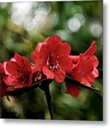 Small Red Flowers Metal Print