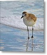 Small Sandpiper Metal Print