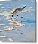 Small Sandpiper Looking For Dinner Metal Print