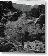 Small Tree Metal Print