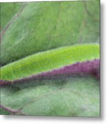 Small White Butterfly Caterpillar Metal Print