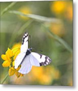 Small White Butterfly On Yellow Flower Metal Print