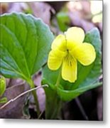 Small Yellow Violet Metal Print
