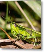 Smaragd-green Grasshopper Metal Print