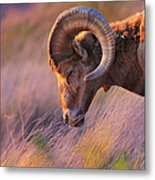 Smell The Wind Metal Print