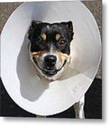 Smiling Dog Metal Print