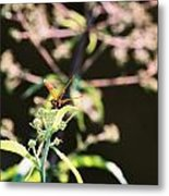 Smiling Dragonfly 3 Metal Print