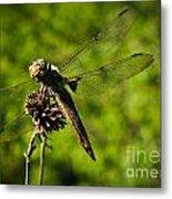 Smiling Dragonfly Metal Print