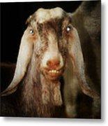 Smiling Egyptian Goat I Metal Print