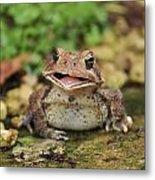 Happy Toad Metal Print