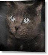 Smokey Cat Metal Print