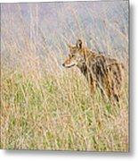 Smoky Mountains Coyote Metal Print