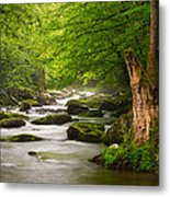Smoky Mountains Solitude - Great Smoky Mountains National Park Metal Print by Dave Allen