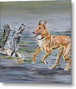Smooth Collie Trying To Herd Geese Metal Print