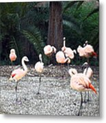 Smudgestick Flamingos Metal Print