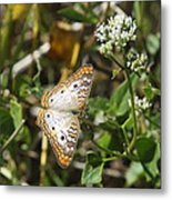 Snack For A White Peacock Butterfly Metal Print