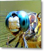 Snack Time Dragonfly Metal Print
