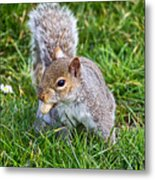 Snack Time For Squirrels Metal Print
