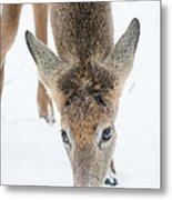 Snacking Deer Metal Print