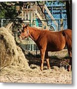 Snacking On Some Hay Metal Print