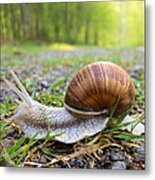 Snail Creeping Over A Forest Path Metal Print