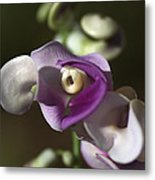 Snail Flower In The Spot Light Metal Print