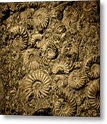 Snail Fossil Metal Print