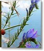 Snail On Flowers Metal Print