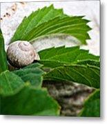 Snail Shell Metal Print
