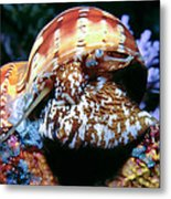 Snails 1 Metal Print