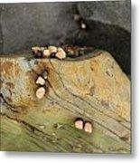 Snails Converge Metal Print