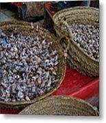 Snails For Sale Metal Print