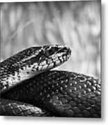 Snake In Black And White Metal Print
