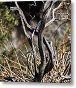 Snake Tree Metal Print